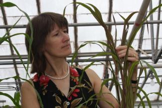 Katrien Devos Named Fellow of Crop Science Society of America